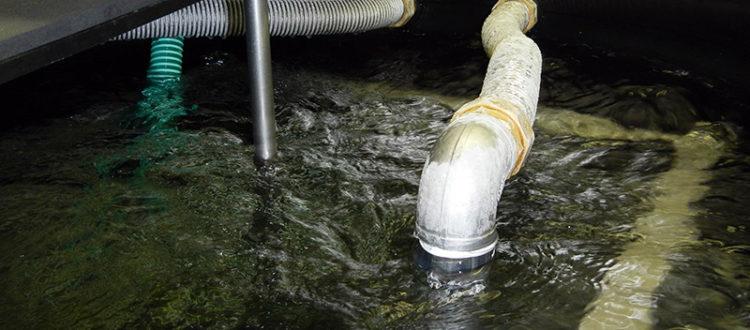 Temperiertes Wasser von 0°C bis +3°C für die Schwallprüfung